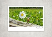 Miniaturfotografie - Kleine Freiheit / Für Dich (Art.-Nr.: PK-MIN-01-013)
